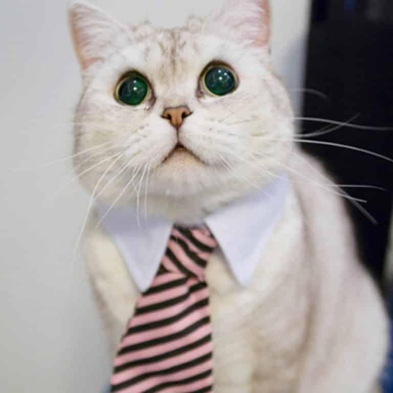 Classic cat tie collar