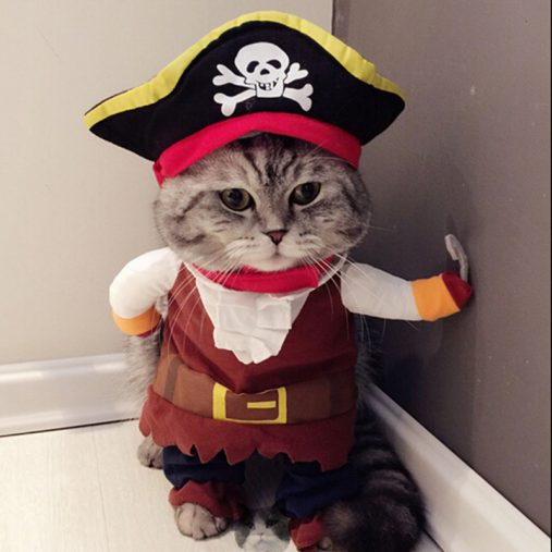Pirate Cat Costume