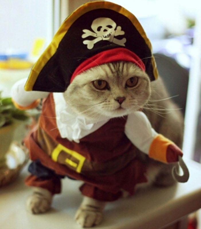 Pirate Cat Costume